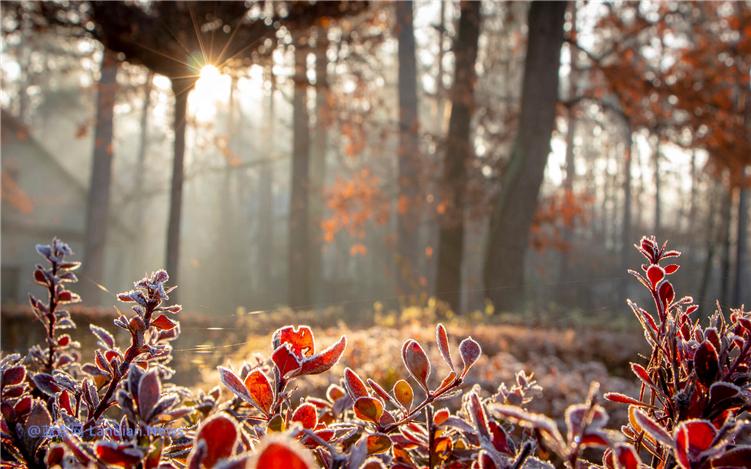 微软推出新的冬季限定主题《寒冷清晨》支持Windows 10免费下载(2K)