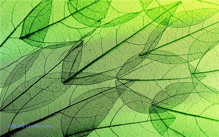 微软推出新的免费主题《叶状结构》让人眼花缭乱的叶脉纹路(2K)