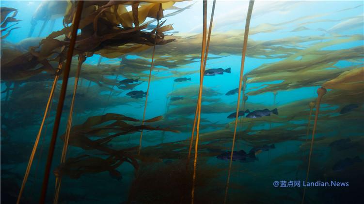 微软推出由国家地理提供的海下世界高清壁纸 包含15张全4K级分辨率