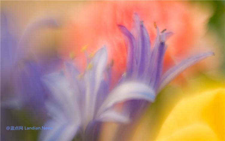 微软推出新的免费主题《花瓣》让你近距离感受各种美丽的花朵(2K)