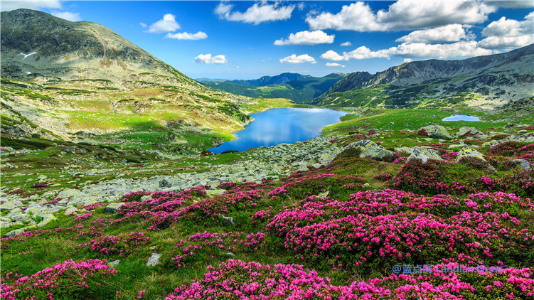 微软推出新主题《野花高级版》内含18张漫山遍野的野花盛开图像(4K)
