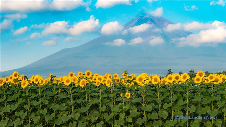 微软推出新免费主题《向日葵高级版》内含17张4K级各种向日葵壁纸(密恐慎入)